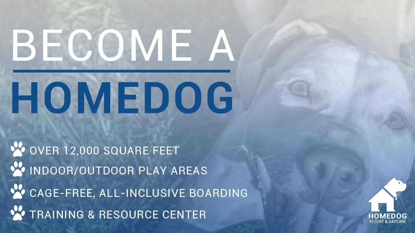 How to Become A Homedog Resort & Dog Daycare Dog